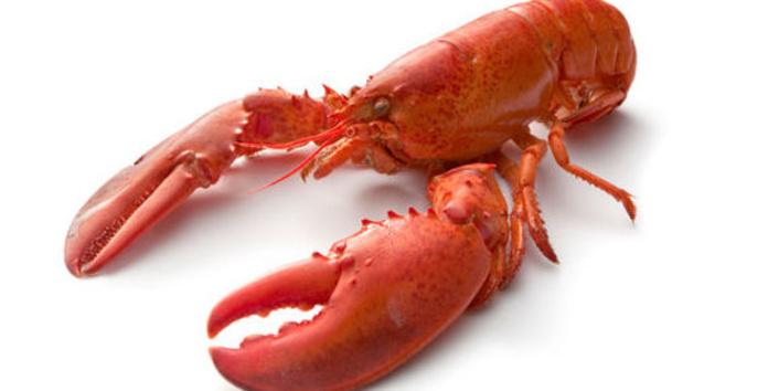 CHITOSAN: Polvo de crustáceo.