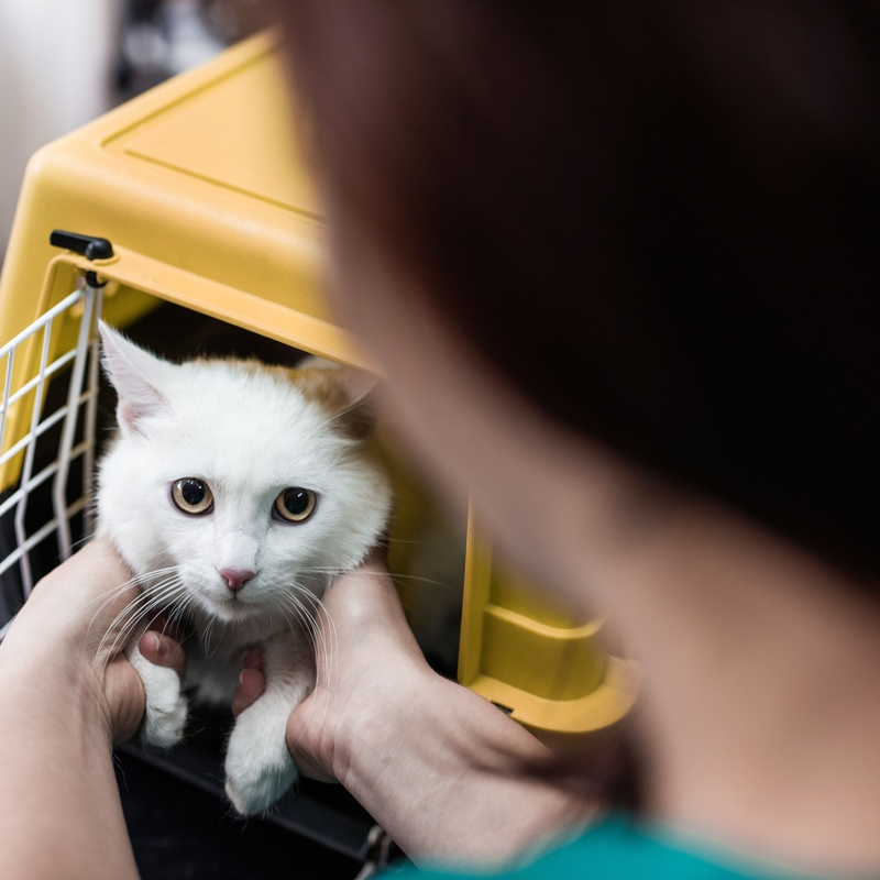 Servicio a Domicilio: Servicios de Mascotas Dreams