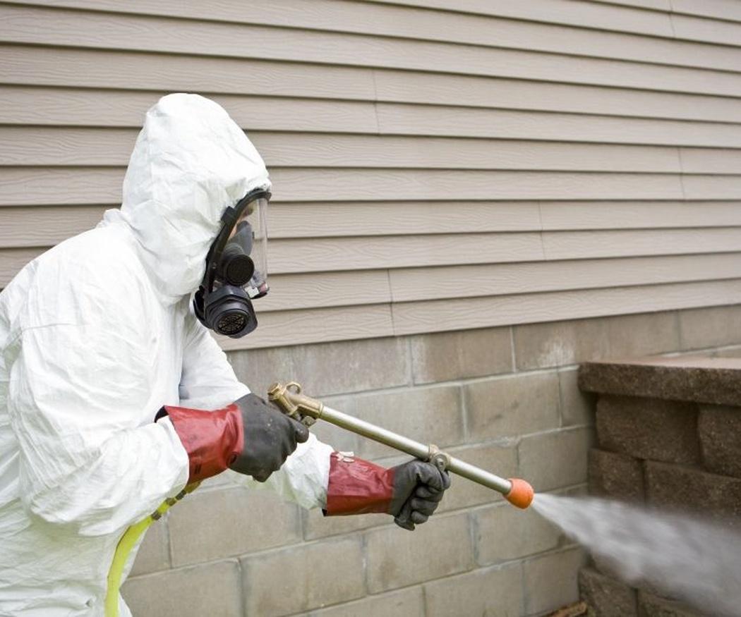 Las plagas más peligrosas para la cadena alimentaria