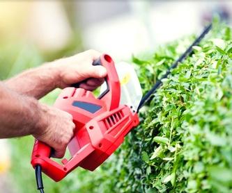 Mantenimiento de jardines: Servicios de Jardinería Pozo
