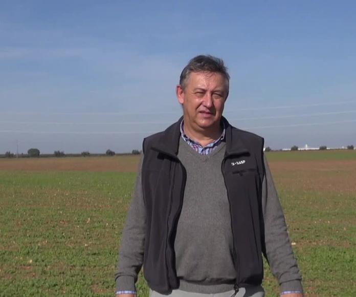 Cleranda, el herbicida definitivo para Colza Clearfield