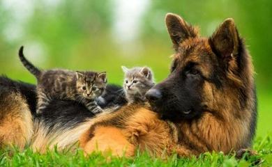 Esterilización para mascotas