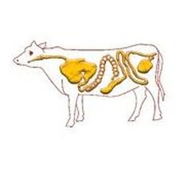 Tripa de bovino: Tipos tripas y envasados of Trialmur