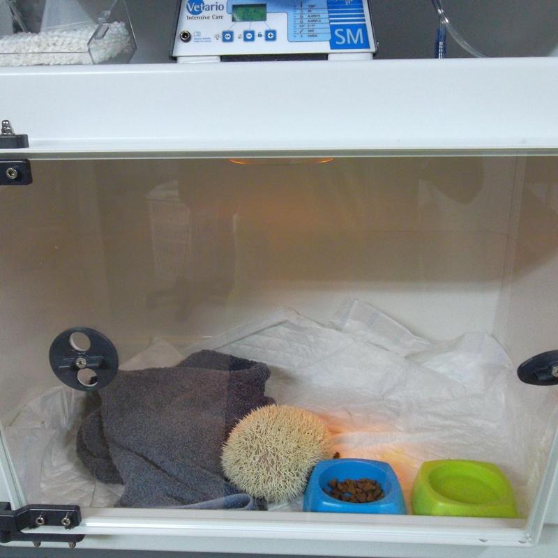 Hospitalización animales exóticos en la clínica veterinaria Selvática