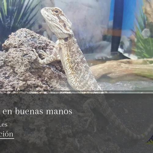 Tienda de mascotas en Tenerife | Amazonas 1