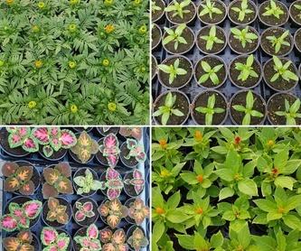 Tenemos muchas variedades de plantas