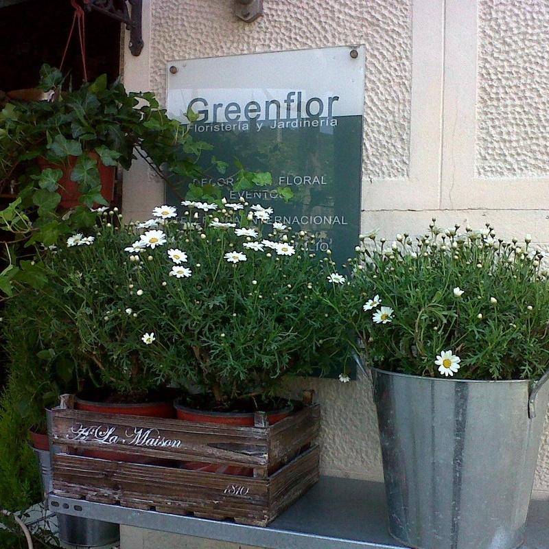 Greenflor, floristeria y jardineria.
