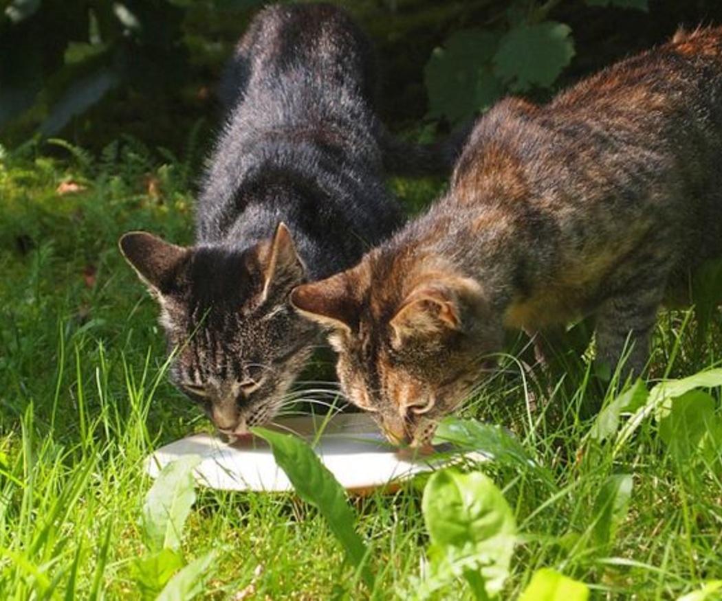 Consejos para cuidar de los gatos en verano