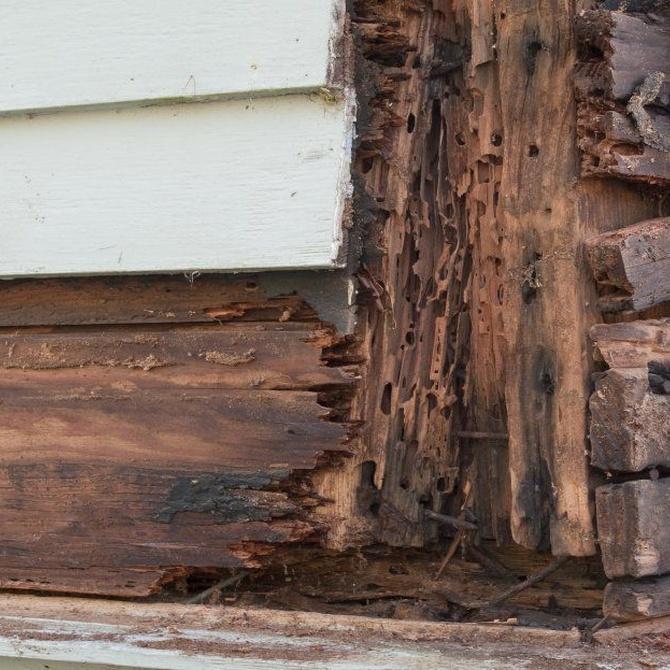 Los peligros de las plagas en la madera
