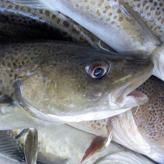 ¿Conoces los beneficios del pescado blanco?