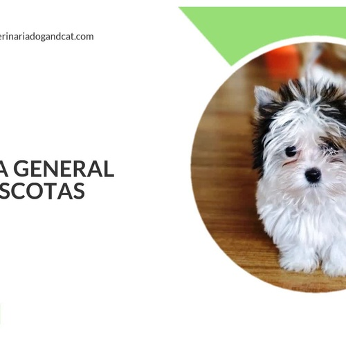 Cirugía veterinaria Chamartín Madrid | Clínica Veterinaria Dog And Cat