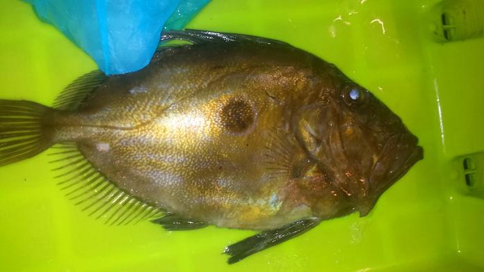 Pez San Pedro: SERVICIOS de Pescastur