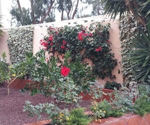 Mantenimiento de Jardín en Campello