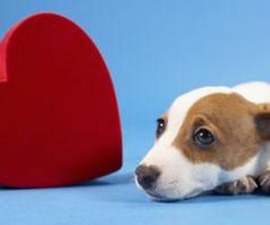 Dirofilariosis canina: ¡peligro en primavera y verano!