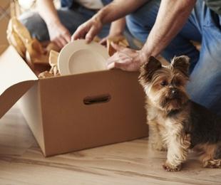 ¿Cómo afectan las mudanzas a los perros?