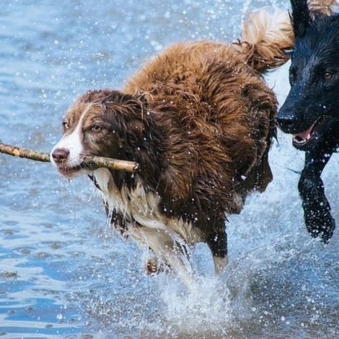 ¿Cada cuánto tiempo se bañan los perros?