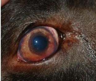 Medicina interna canina y felina