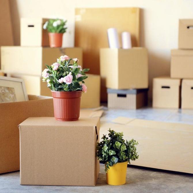 Consejos para organizar las cajas de tu mudanza