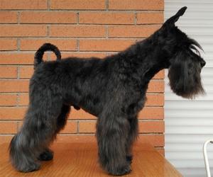 Spa para perros en Terrassa