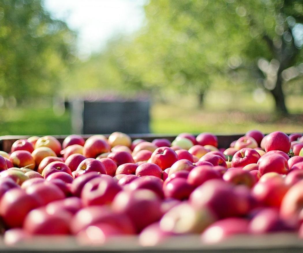 Las frutas y verduras de otoño