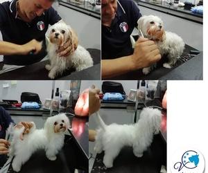 Academia de formación para peluquería canina