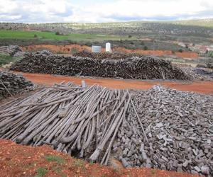 Realizamos talas de árboles secos del modo tradicional