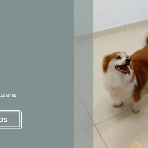 Centro veterinario en El Sauzal | Centro Veterinario El Lagar