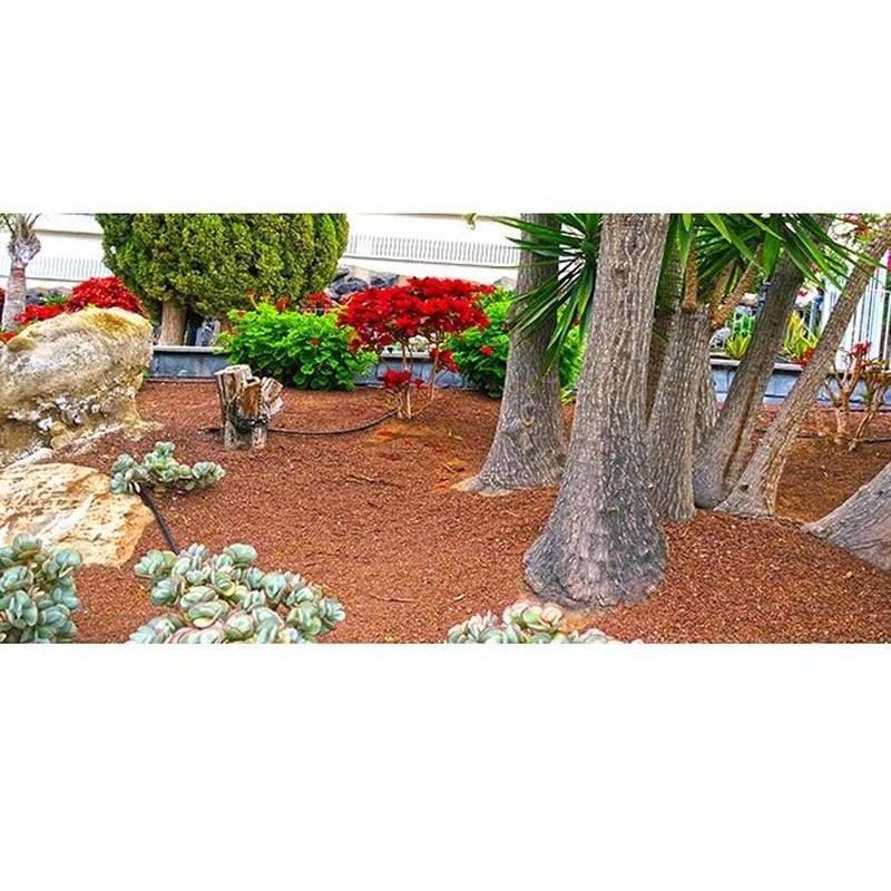 Diseño y construcción de jardines : Servicios   de Jardinería Tudor