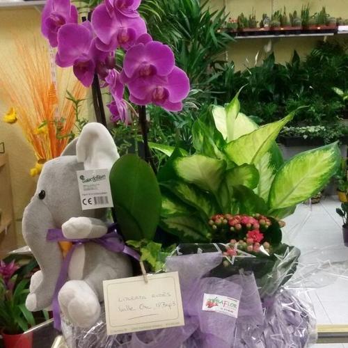 Orquídeas naturales