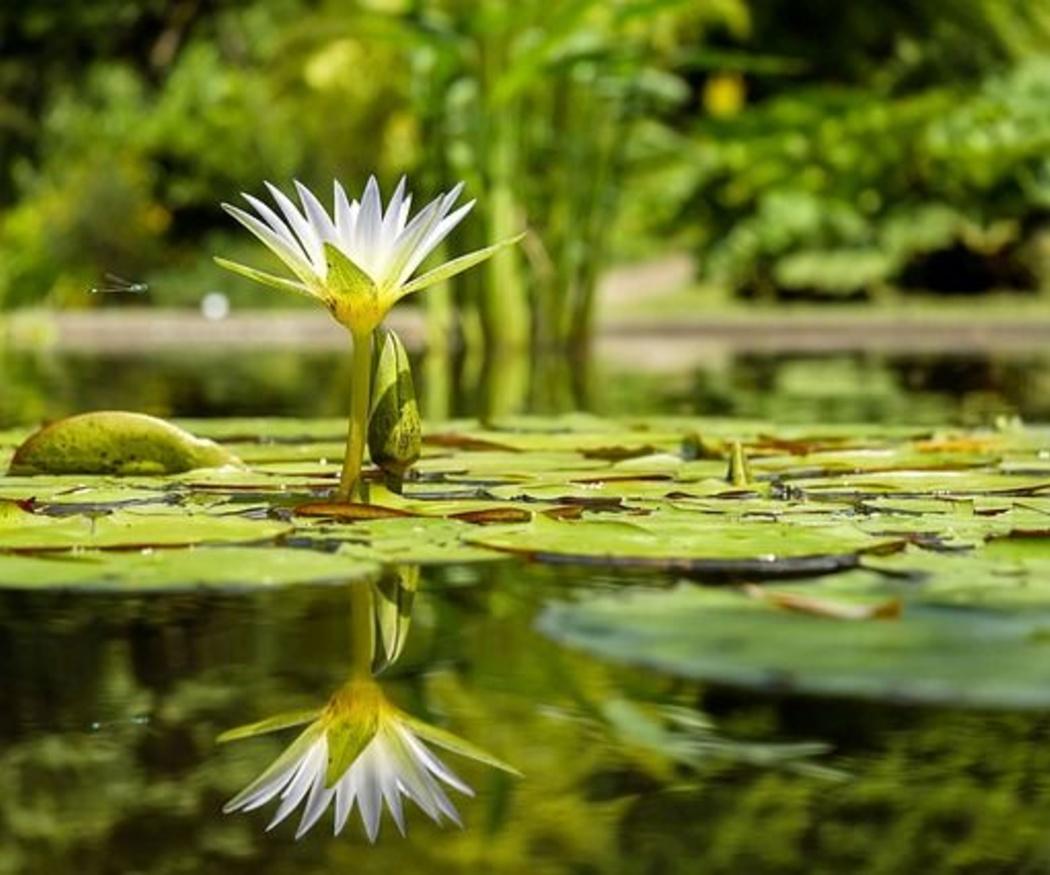 El estanque más bello para tu jardín