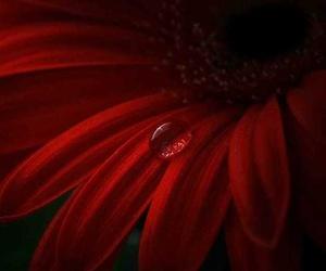 Basta una gota de rocío una lágrima para que los sentimientos afloren.