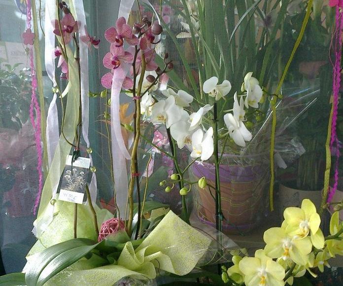 Plantas: Flores de Flores Benedé