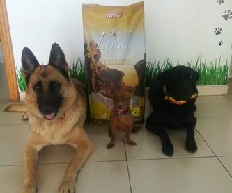 Baño Canino: Servicios de Que Guau
