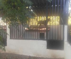 Residencia de mascotas en Navalcarnero   La Casita de Rosell