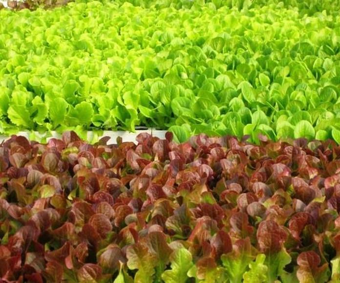 Verduras: Productos de Horta+Sá