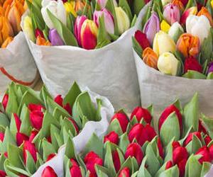 Regala flores en cualquier momento