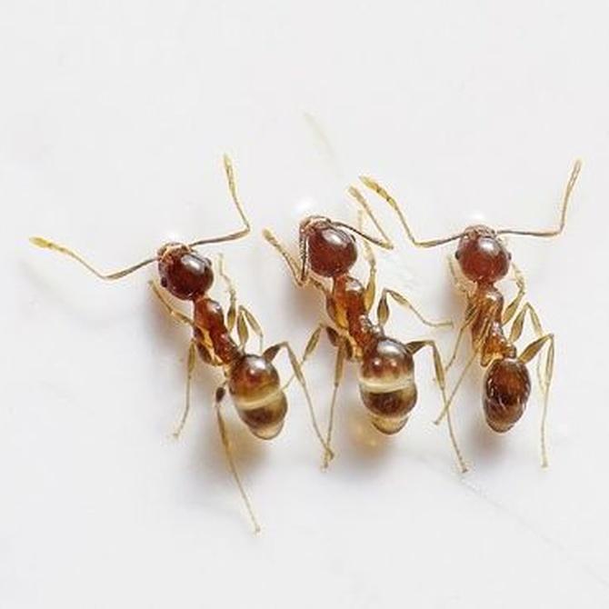 ¡Me invaden las hormigas!