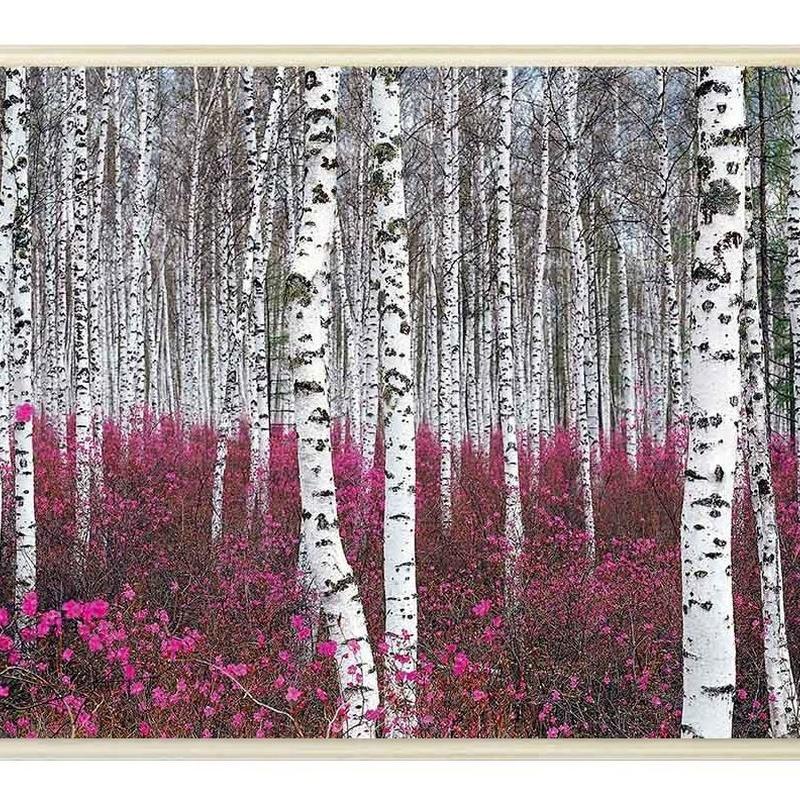 Bosque: catalogo de 4 INGLETES BRAVO MURILLO