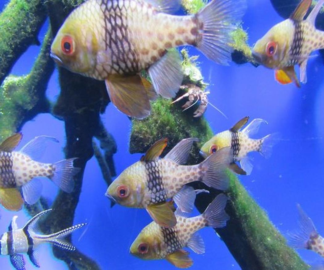 El cuidado de los peces tropicales