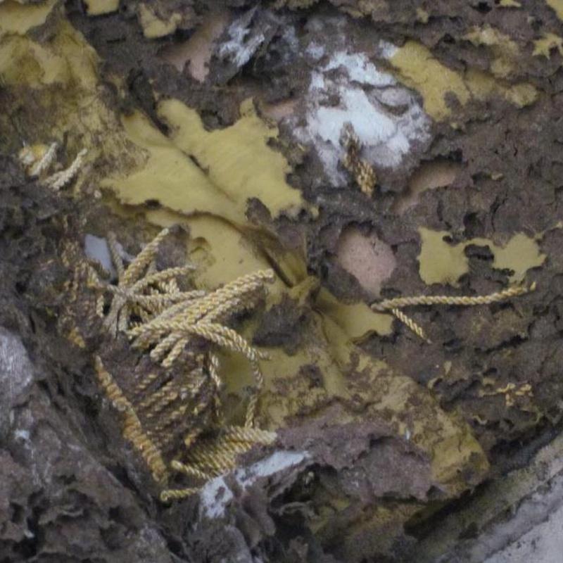 Voraces termitas