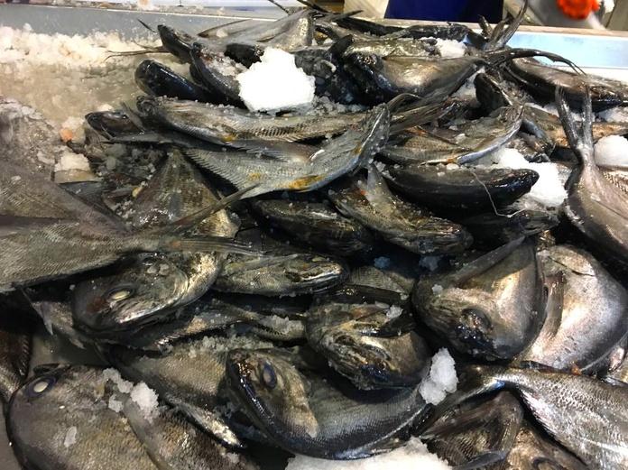 Palometa negra: SERVICIOS de Pescastur