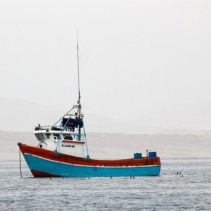 Beneficios del marisco y el pescado congelados