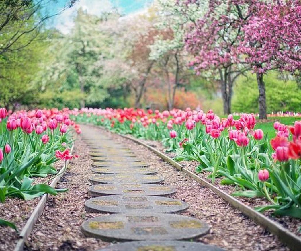 Cómo elegir plantas para tu jardín