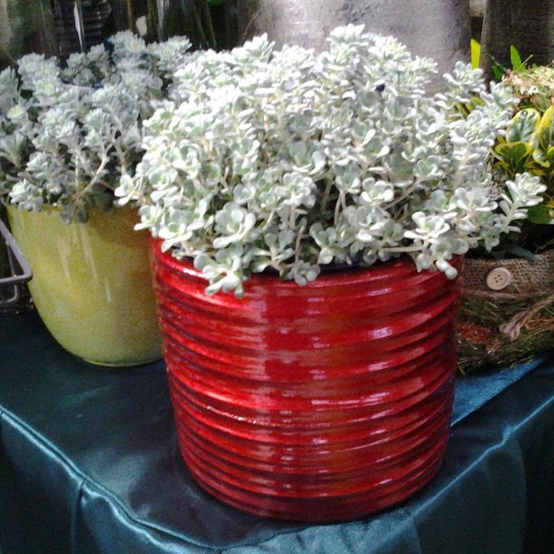 Cape Blanco: Servicios de Arte Flor