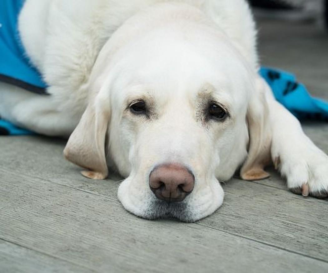 Las urgencias veterinarias más frecuentes