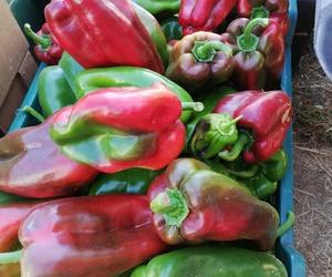 Reparto a domicilio de fruta y verdura ecológica en Madrid