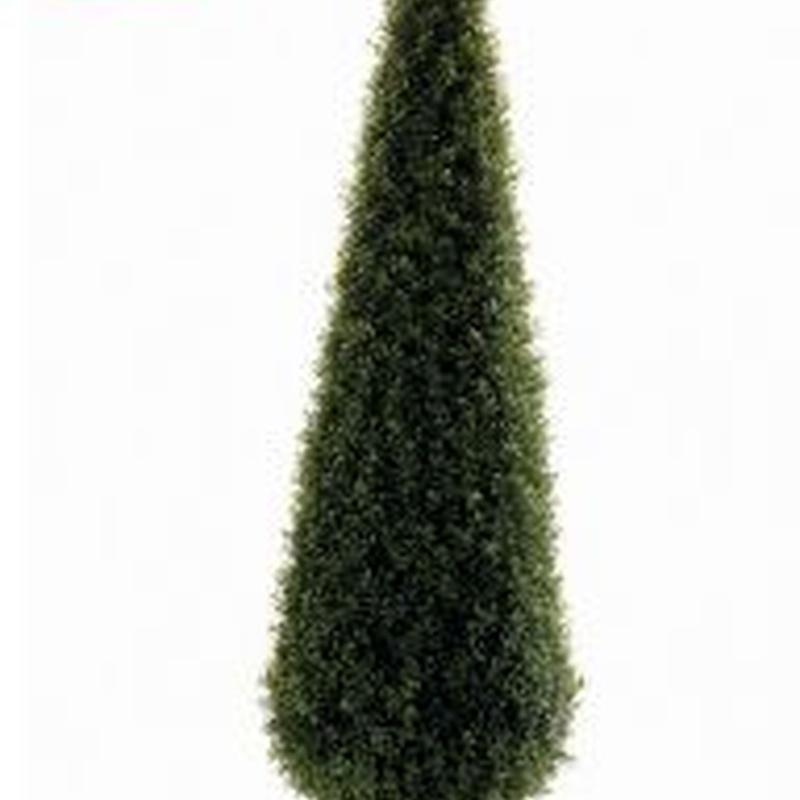 árbol boj cono 135