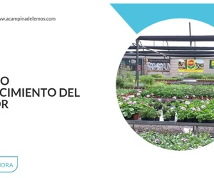 Centros de jardinería en Monforte de Lemos | A Campiña de Lemos