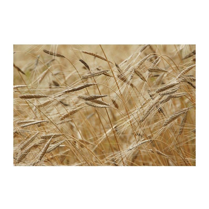 Cereales: Productos de Abonos Concar S.L.