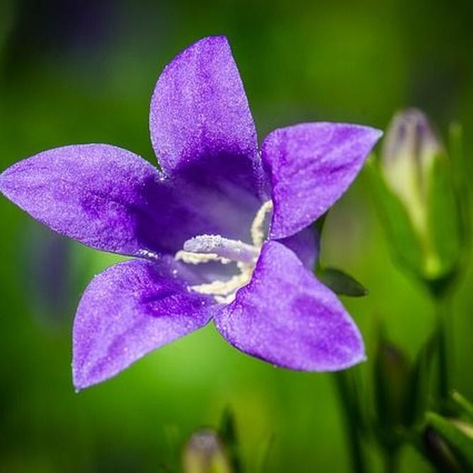 Invernaderos para tener tus flores listas en primavera